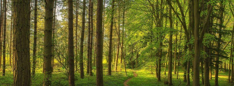 Лесной сектор